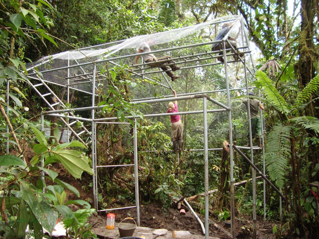merazonia-cage-building-amazon-volunteers-ecuador