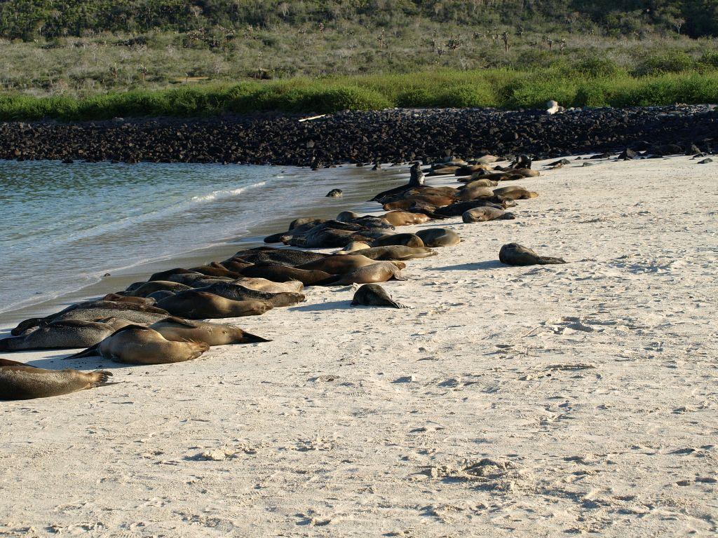 sea-lions-galapagos-tour-cruises-ecuador