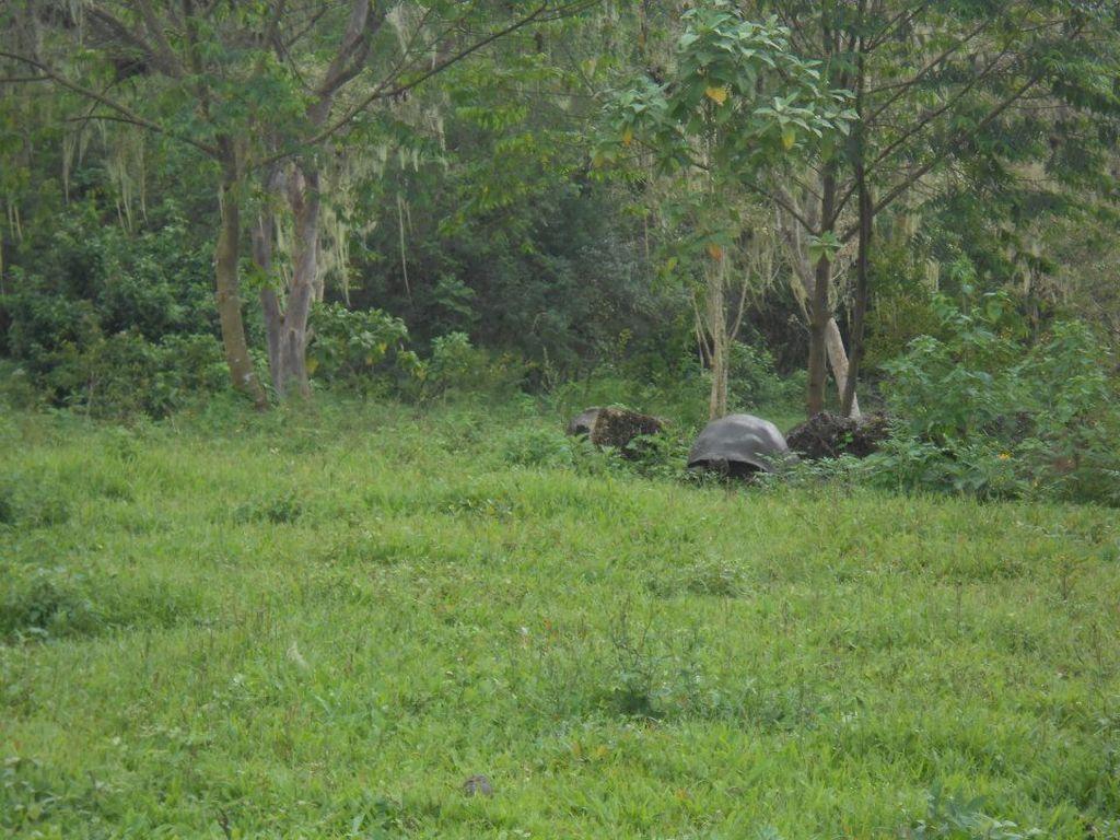 galapagos-tortoise-tour-travel-ecuador