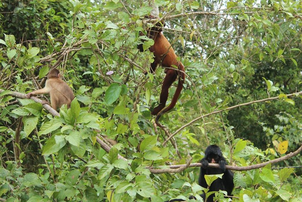 monkeys-amazon-tour-iquitos-peru
