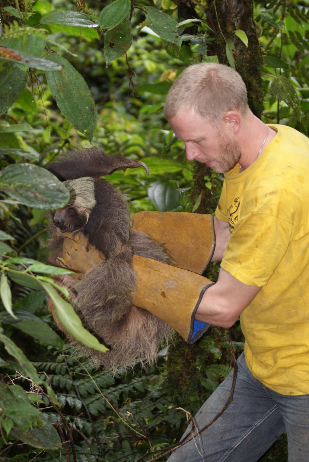sloth-release-merazonia-amazon-tour-ecuador